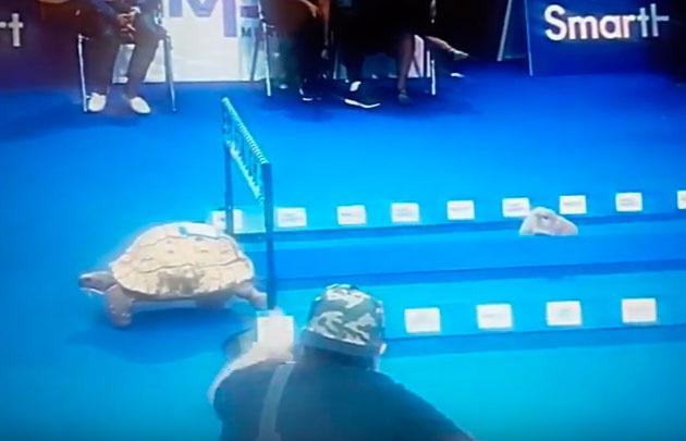 Video viral- Tortuga vence a liebre en carreras