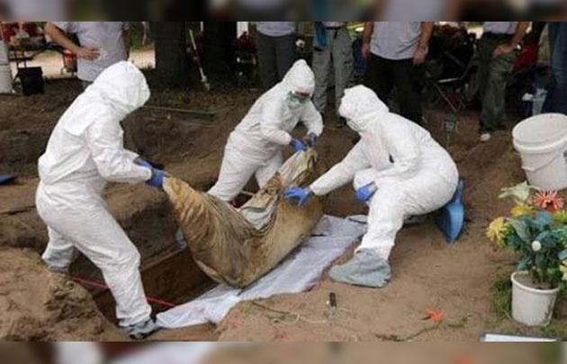 Estupor en México por el hallazgo de 244 cadáveres