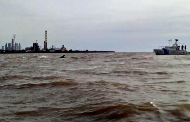 Una ballena quedó varada en Dock Sud