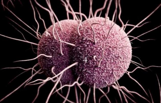 OMS advierte que la gonorrea se está volviendo resistente a los antibióticos