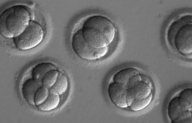 Científicos corrigen por primera vez genes defectuosos en embriones humanos