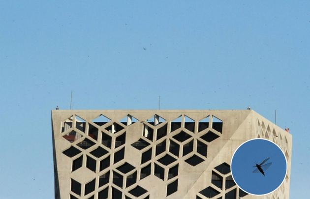 Una plaga de langostas gigantes invade a Córdoba — Mirá el video