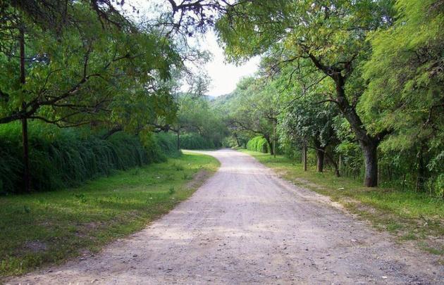 Un nene murió aplastado por un árbol en un campamento scout