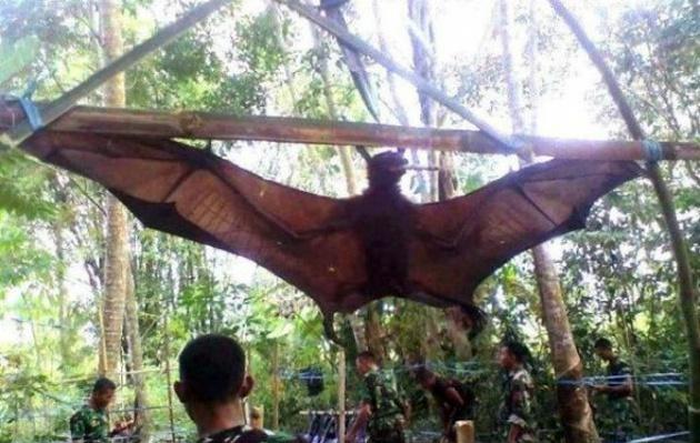 Capturan colosal murciélago de casi 2 metros — Filipinas